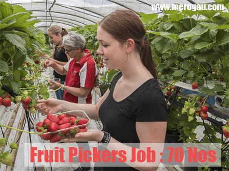 Fruit Farm Worker in Canada