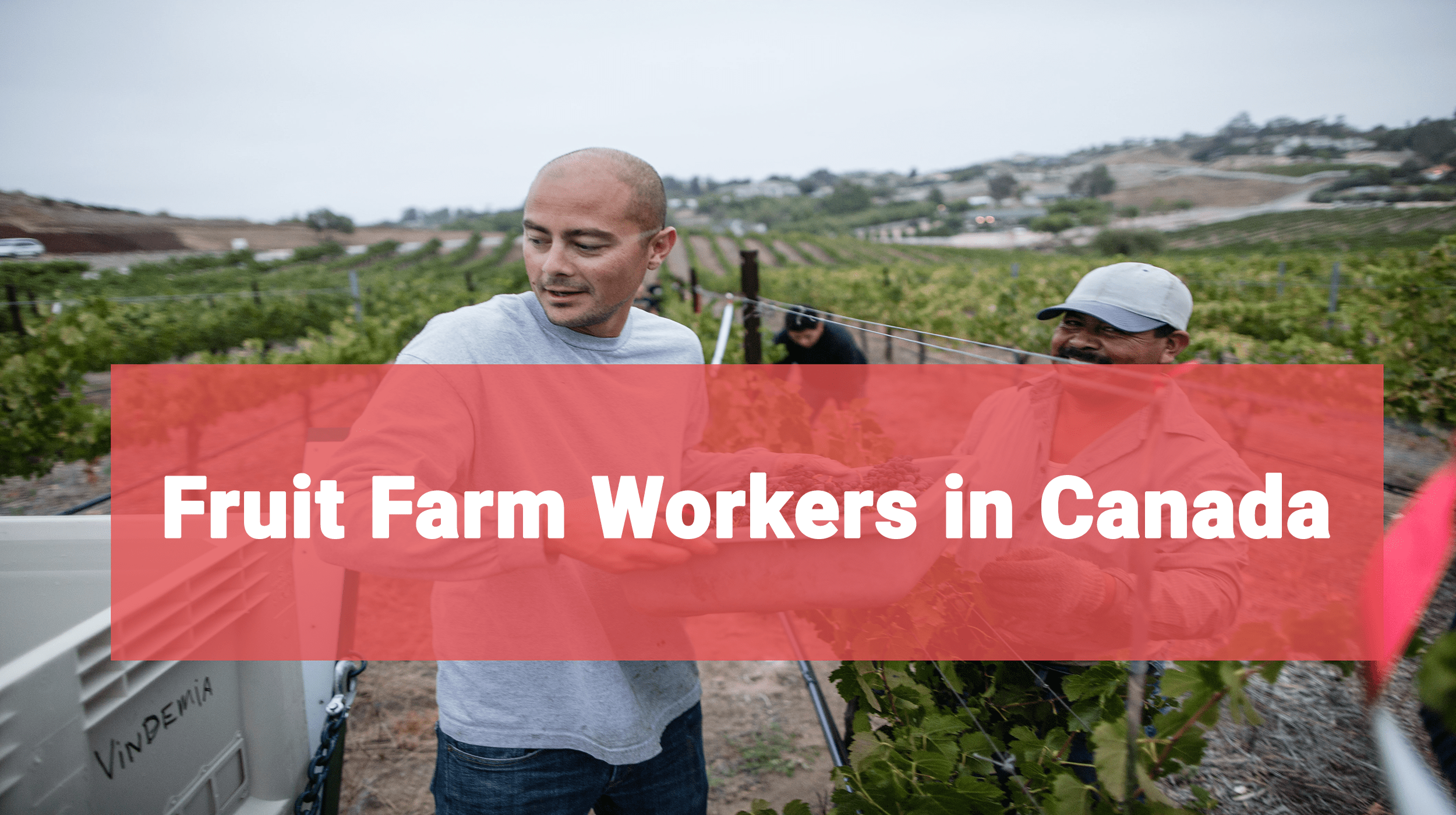 Fruit and Grapes picking jobs in Canada