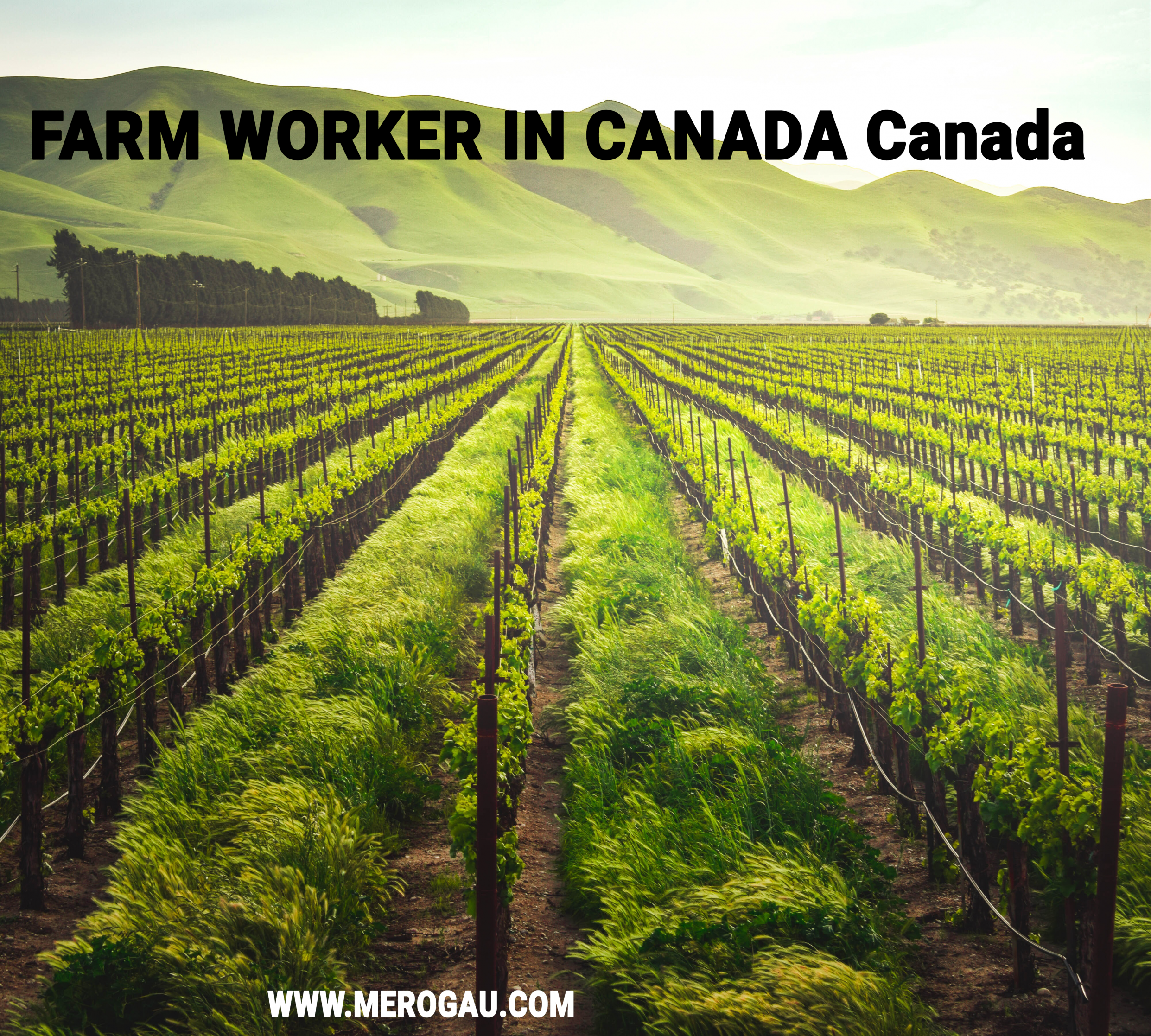 Dairy Farm Workers in Canada